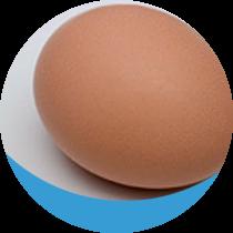 Egg - Pennsylvania Water Problems